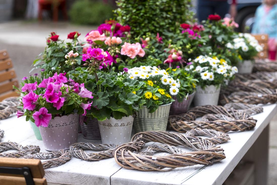 rosenfest-flores-sandra-jonas-arloff-bad-muensteteifel-8505